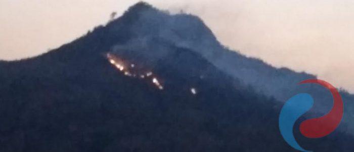 Gunung Gedhe di Ponorogo Ludes Terbakar