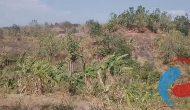 Permalink ke 275 Hektar Kawasan Hutan Lindung Akan Direhabilitasi dengan Tanaman Berbuah