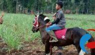 Permalink ke Peserta Pacuan Kuda Dandim Cup Kodim Bondowoso Lakukan Sesi Latihan