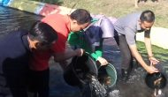 Permalink ke Tiga Ribu  Benih Ikan Ditebar di Sungai Edukasi Desa Klabang
